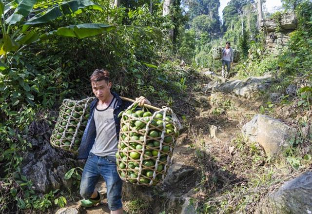 Bất ngờ những cơ nghiệp tiền tỷ giữa núi rừng Hàm Yên