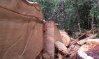 Phạt nữ cán bộ huyện phá rừng 21 triệu đồng