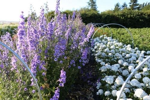 Cô gái trẻ bỏ việc công sở theo đuổi ước mơ tạo một khu vườn bạt ngàn hoa đẹp mê hồn