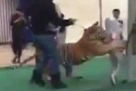 Hổ vồ