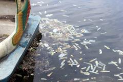 Hà Nội: Bao cao su nổi trắng hồ Linh Đàm