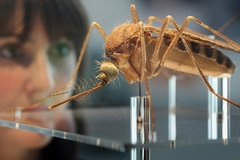 17 quận huyện Sài Gòn có người nhiễm virus Zika