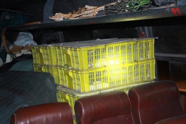 Xe khách cho 120 con hổ mang nằm chung hành khách