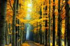 Lạc lối trong những khu rừng đẹp đến ma mị