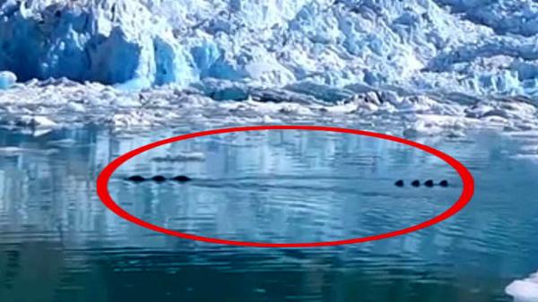 10 clip nóng: Tê giác 'khủng' truy đuổi người, cả phố náo loạn
