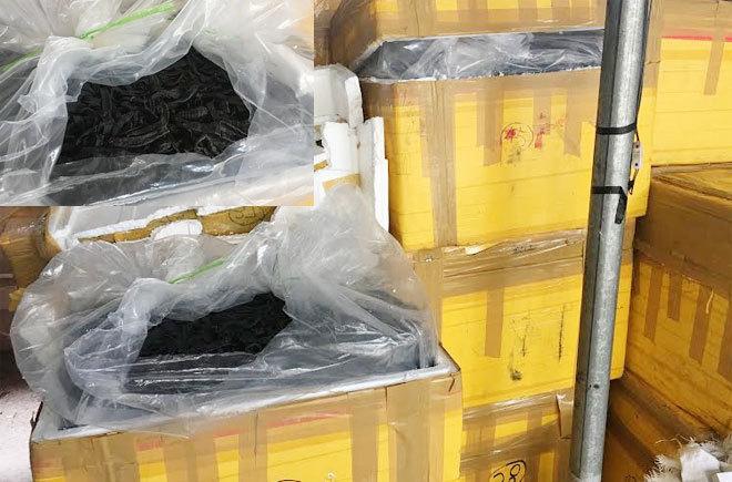Đáng sợ: 1 tấn đỉa khô tuồn ra thị trường