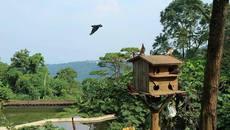 Ý kiến Bộ Xây dựng về 'resort khủng' trong vườn quốc gia Ba Vì