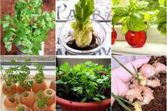 10 loại rau trồng kiểu 'Thạch Sanh' giúp bạn ăn hoài không hết