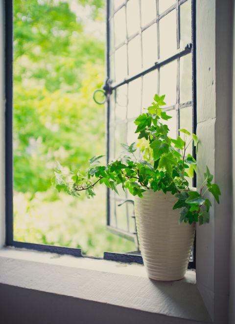 8 loại cây trồng trong nhà khiến 'mệt mỏi chỉ còn là chuyện nhỏ'