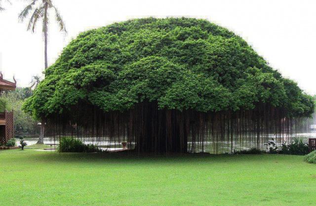 loại cây, thực vật, thế giới, tuổi thọ