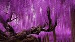Những cây kỳ diệu như đến từ hành tinh khác
