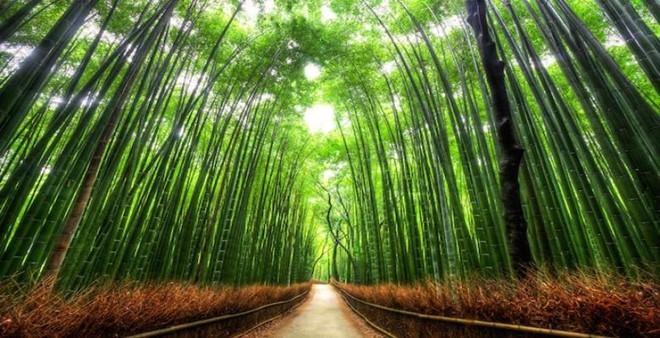 Những địa điểm du lịch không thể bỏ qua khi đến Nhật Bản - ảnh 3