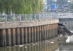 Rác thải, xác cá lại nổi đầy trên kênh Nhiêu Lộc