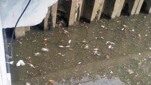kênh nhiêu lộc, cá chết, ô nhiễm, cá chết kín mặt kênh, Nhiêu Lộc - Thị Nghè