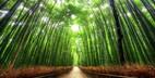 Những địa điểm du lịch không thể bỏ qua khi đến Nhật Bản