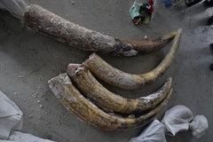 3 container chứa lô ngà voi triệu đô ở Sài Gòn