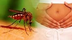Khi nào thì thai phụ nên tầm soát Zika?