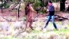 Clip thú hoang bị đấm vỡ mặt gây sốt, 3 triệu lượt xem