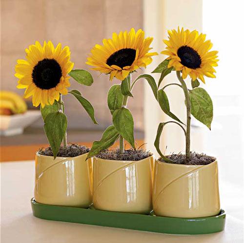 Trồng 5 loài hoa này vào tháng cuối năm để hóa giải phong thủy xấu trong nhà