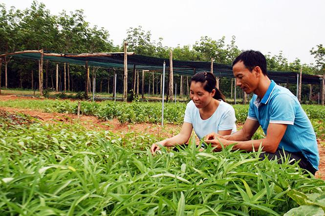 Thạc sỹ bỏ viện nghiên cứu về trồng rau: 'Họ nghĩ vợ chồng tôi bị ma nhập'