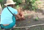Truy tìm kẻ hành hạ dã man bé trai ở Campuchia