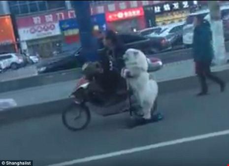Há hốc mồm với chú chó lái scooter