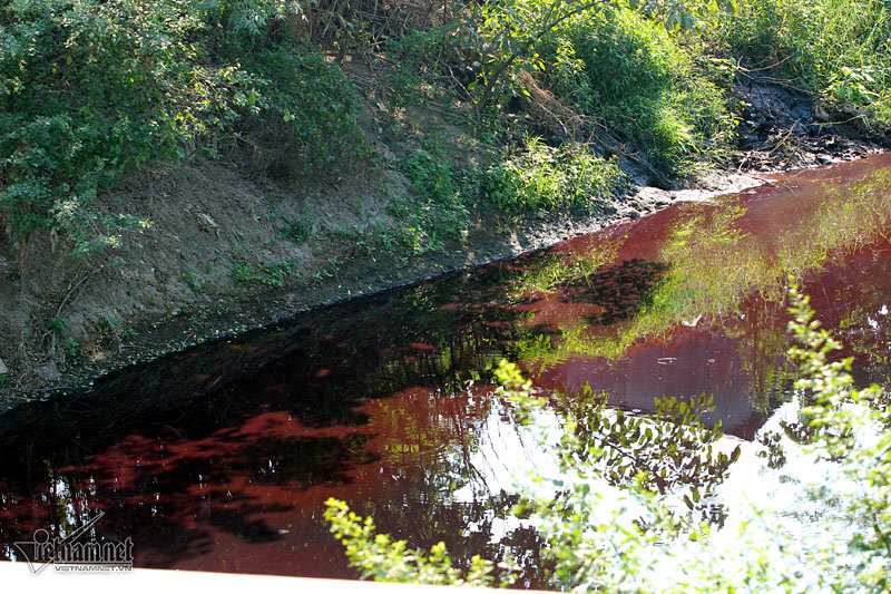 Hà Nội: Lềnh bềnh rau muống trên dòng sông đỏ quạch