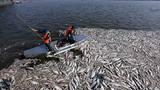 Hà Nội: Cá chết do 'nước thải và thay đổi thời tiết'