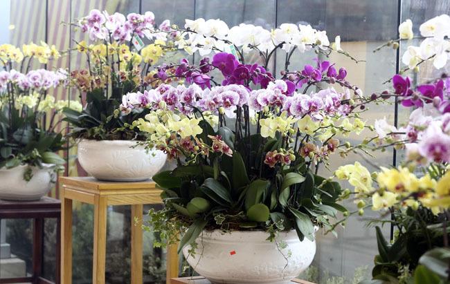 Tết Đinh Dậu 2017: Chuyên gia phong thủy gợi ý chọn mua hoa chơi Tết để rước lộc tài
