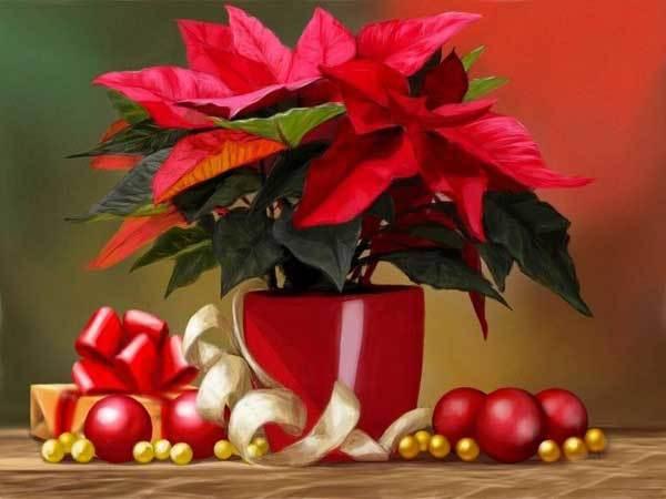 20161213102945 hoa trang nguyen 4 Gợi ý chọn mua hoa vừa đẹp vửa có phong thủy tốt chơi Tết để rước lộc tài