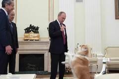 Xem Tổng thống Nga trổ tài nựng cún cưng