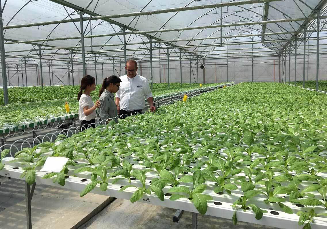 liên kết nông nghiệp, liên kết sản xuất, sản xuất nông nghiệp, nông sản, ngành nông nghiệp, an ninh lương thực, an toàn vệ sinh thực phẩm