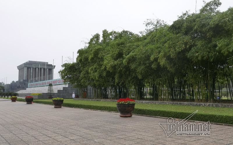 Lăng Chủ tịch Hồ Chí Minh, hàng tre bên Lăng Bác