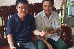 Nghệ An: 'Cát lợn' được trả 3 tỷ đồng... ế khách