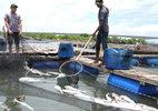 Dân nuôi cá thắng kiện, DN bồi thường hơn 13 tỷ đồng
