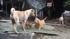 Hành động bất ngờ của chó mẹ khiến dân mạng rơi lệ