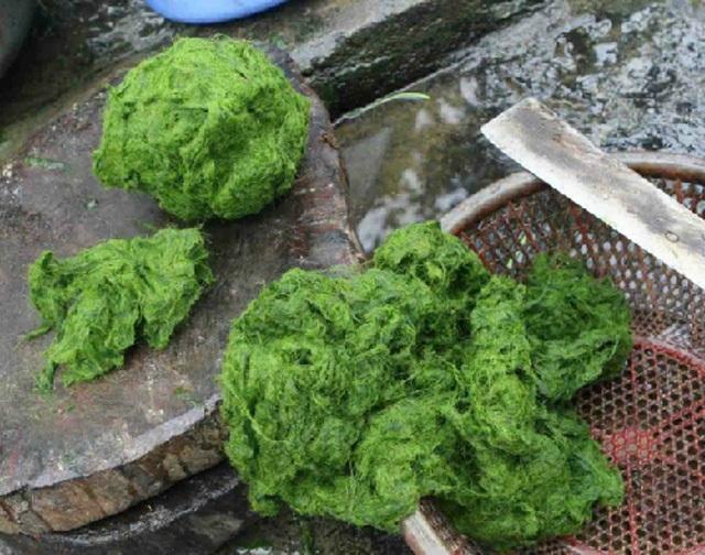 Lên Tây Bắc, thưởng thức đặc sản từ… rêu