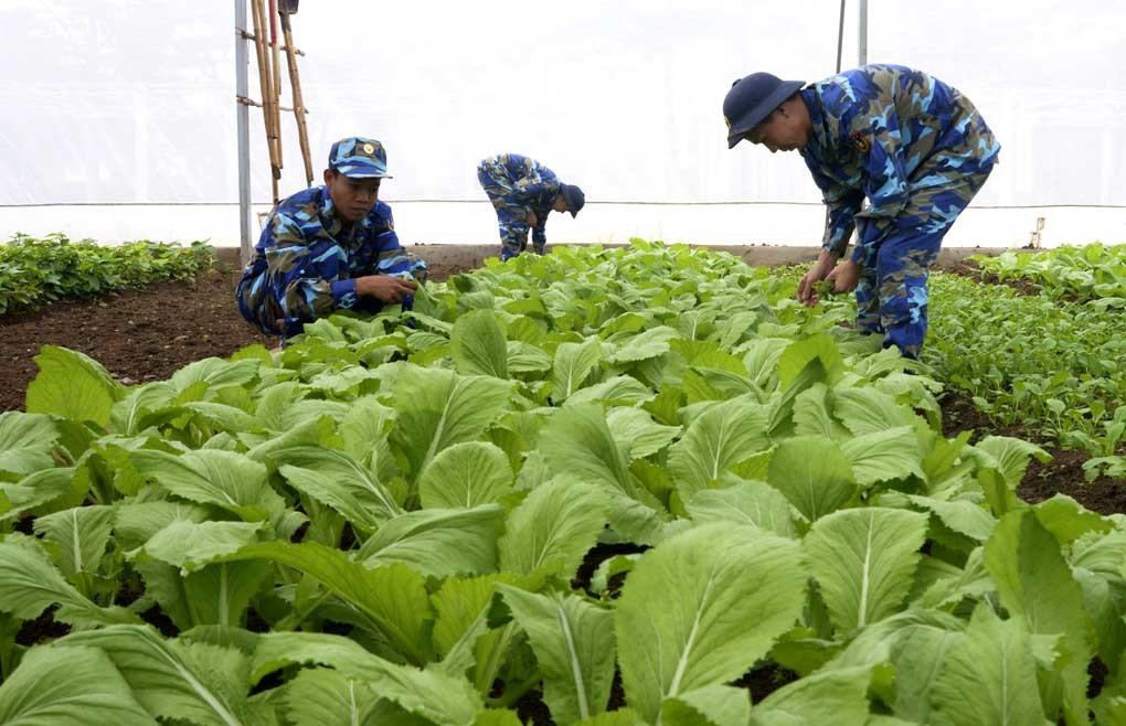Vườn rau xanh mướt ở nơi không tưởng của Cảnh sát biển