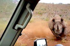 Tê giác đen lao vào húc ô tô trong cơn cuồng nộ