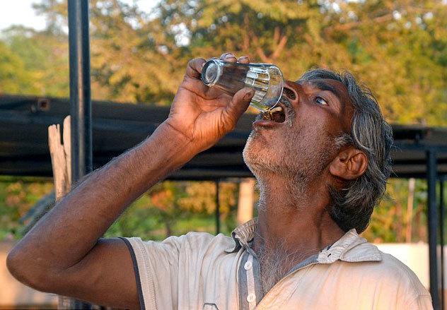 Dùng nước tiểu bò trị trứng cá, hen suyễn
