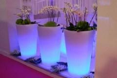 Những bình hoa phát sáng cực độc trang trí nhà đẹp