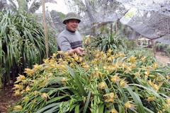 Địa lan Sa Pa giá gần trăm triệu đồng vẫn có khách đặt