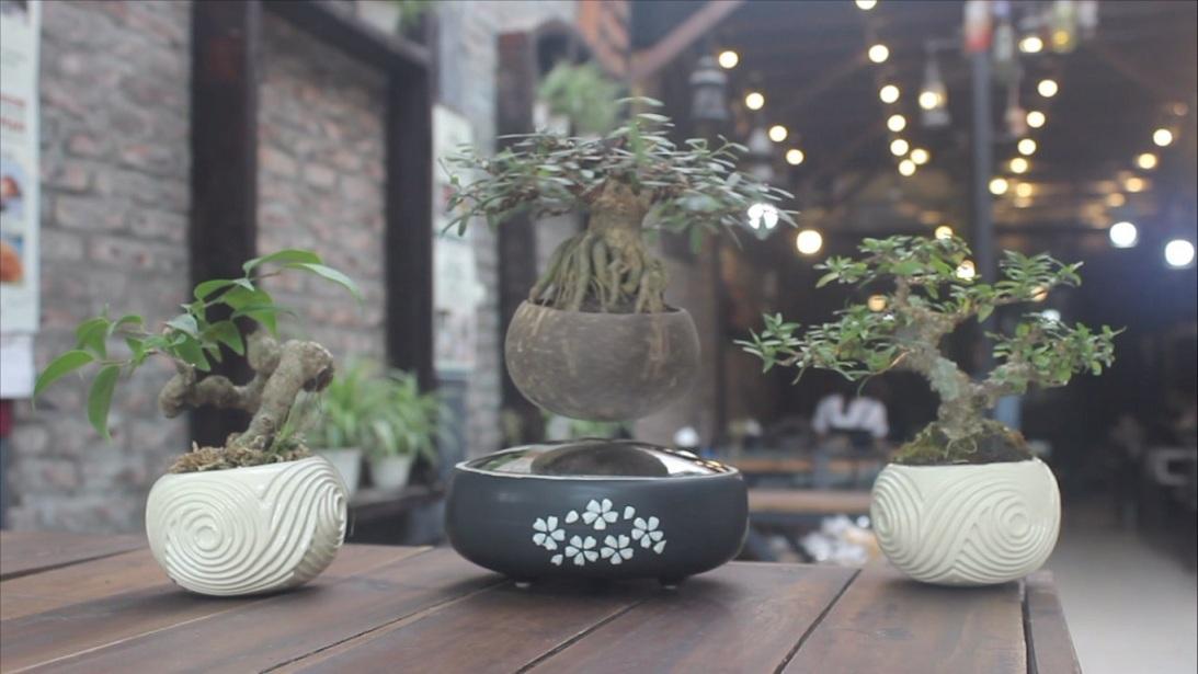 bonsai bay, airbonsai, cây biết bay, hà nội, người chơi cây, mặt hàng lạ