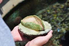 Bào ngư Úc 9 triệu/kg: Nhà giàu Việt dưỡng sức chơi Tết
