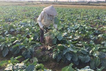 Hà Nội: Bán 3 yến su hào mới mua được bát phở
