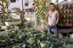 Bố đảm trồng rau sạch, thả cá trên sân thượng phục vụ vợ con