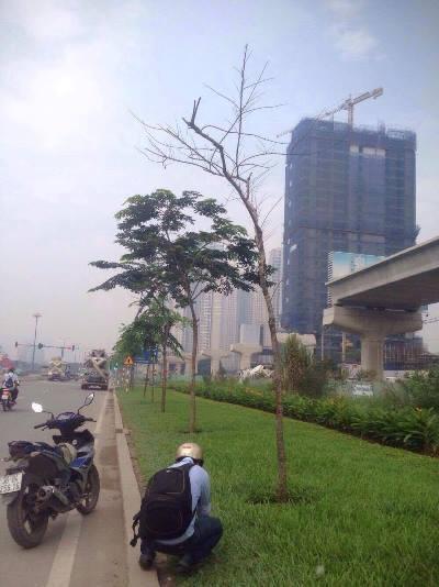 Hàng loạt cây xanh trụi lá, héo khô ở cửa ngõ Sài Gòn