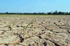 Hạn mặn nghiêm trọng ở đồng bằng sông Cửu Long