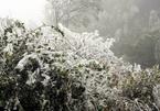 Phan Xi Păng rét 0 độ kèm băng giá