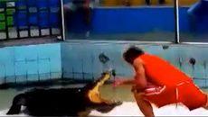 10 clip 'nóng': Cá sấu 'khủng' xé nát tay huấn luyện viên xiếc